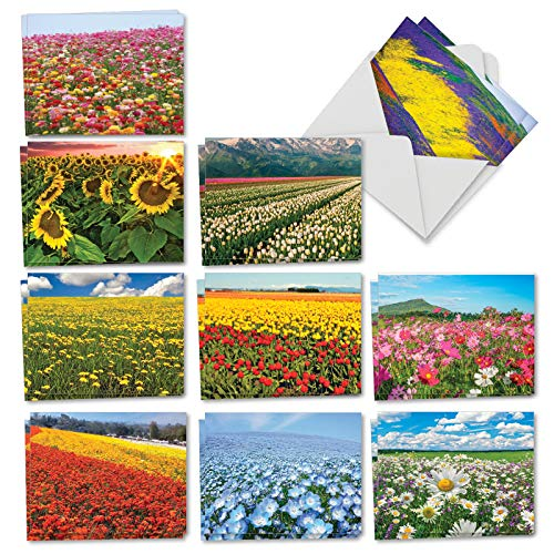 Super Blooms: 20 Assorted Blank All Occasions Note Cards Featuring Vast Fields of Flowers and Plants, with Envelopes. AM7175OCB-B2x10