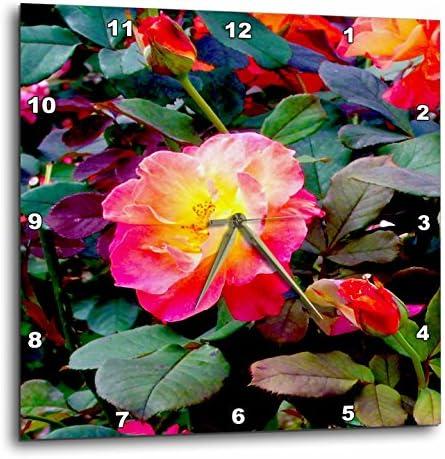 3dRose DPP_120359_3 Josephs Coat Rose, Lovely Colorful Josephs Coat Wall Clock, 15 by 15-Inch