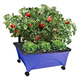 CITY PICKERS 24.5 in. x 20.5 in. Patio Raised Garden Bed Grow Box Kit,Self Watering and Improved Aeration – Mobile Unit with Casters in Cobalt Blue