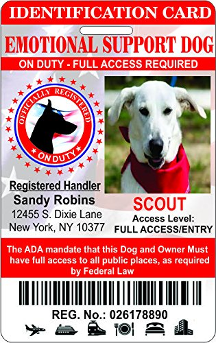IDCards4U Service Animal Econo Identification Badge ID's (Emotional Support)