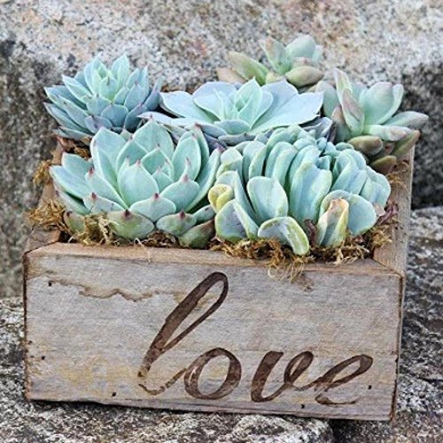 Colorful Succulent Garden in Reclaimed Wood Planter Branded with Love (8.5