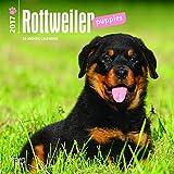 Rottweiler Puppies 2017 Mini 7x7