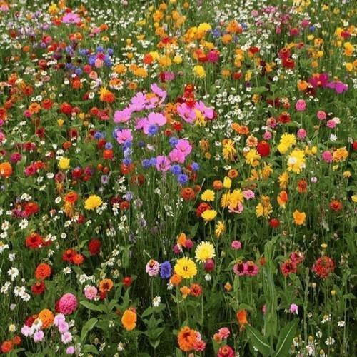 (2000+Deer Resistant Wildflower Mix 15 Different Flower Seeds Butterflies Bees)