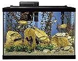 Tetra Aquarium 20 Gallon Fish Tank Kit, Includes
