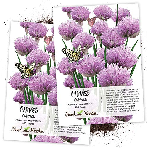 Seed Needs, Common Chives Herb (Allium schoenoprasum) Twin Pack of 400 Seeds Each Non-GMO