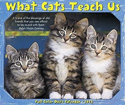 2018 What Cats Teach Us Box Calendar