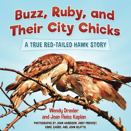 Buzz, Ruby, and Their City Chicks: A True Red-Tailed Hawk Story