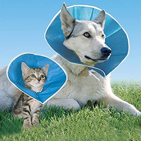 Perro y gato isabelino recuperación collar Supersoft plegable y no restrictivo cómodo 6 tamaños: Amazon.es: Productos para mascotas