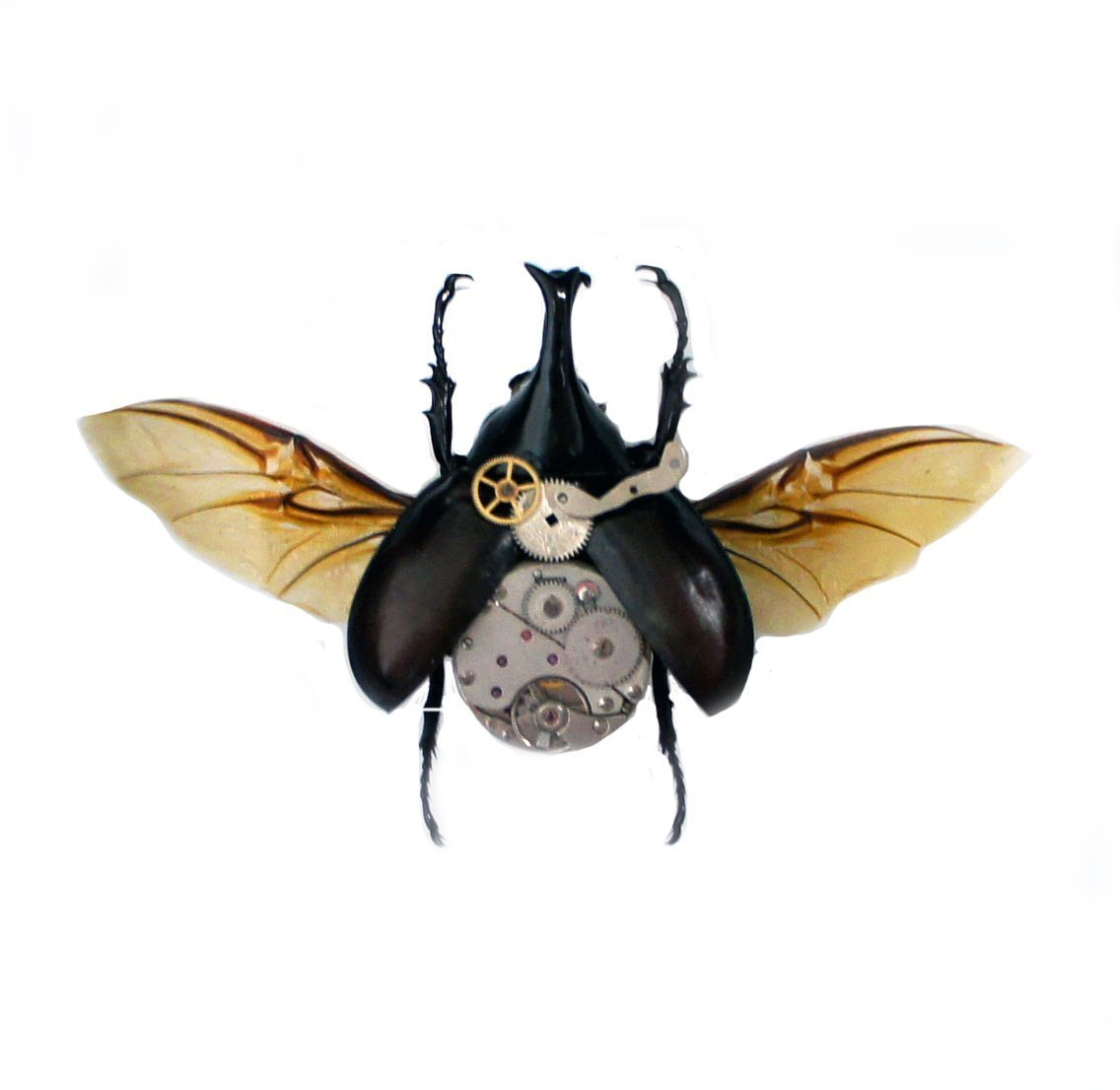 Real Steampunk Rhino Beetle Insect Taxidermy Display Shadow Box 3