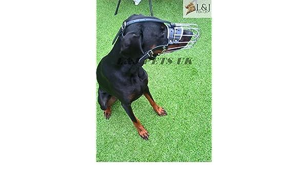 Nuevo alambre de metal perro Bozal de dóberman: Amazon.es ...