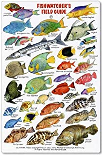 Caribbean mini fish card | franko's fabulous maps of favorite.