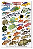 Fishwatchers Reef Field Guide: Fishes of Tropical Atlantic & Caribbean ID Card