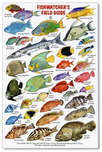 Fishwatchers Reef Field Guide Fishes Of Tropical Atlantic