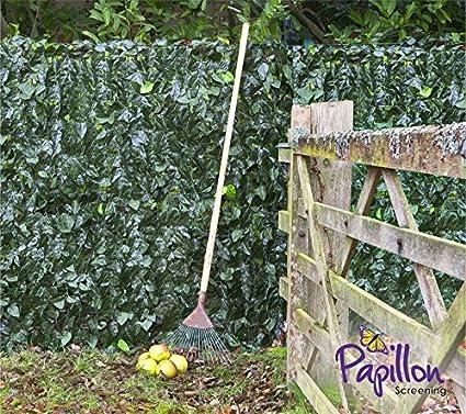 3 x 1m Seto Artificial de Hojas de Hiedra de Papillon™: Amazon.es: Jardín