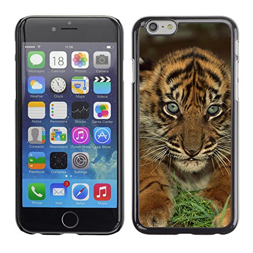 Premio Sottile Slim Cassa Custodia Case Cover Shell // V00003886 bébés tigres sumatran // Apple iPhone 6 6S 6G 4.7""