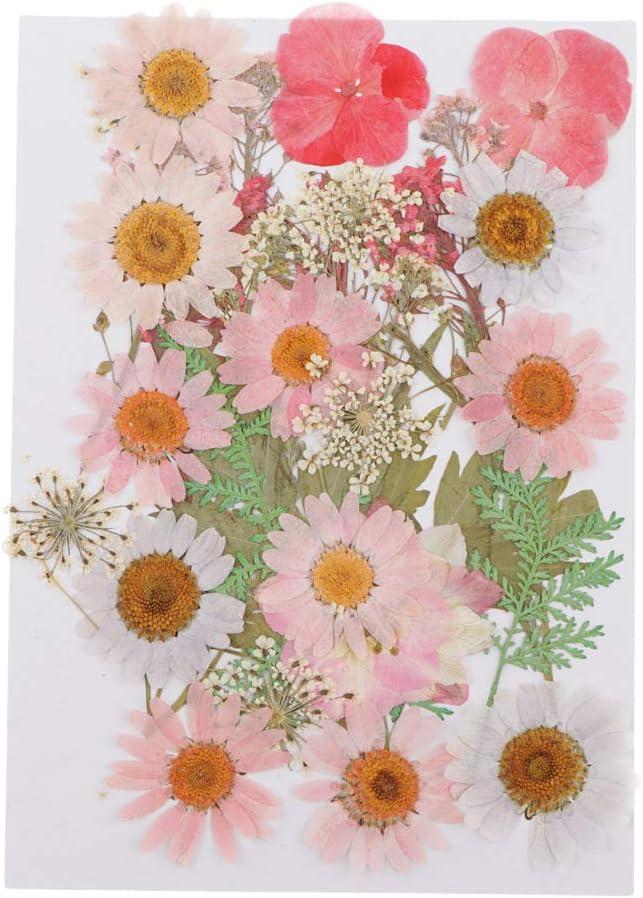 25pcs Mehrfache Trockenblumen Blumenbl/ätter Trockene Blume Getrocknet Bl/üten f/ür Kartenherstellung Scrapbooking B