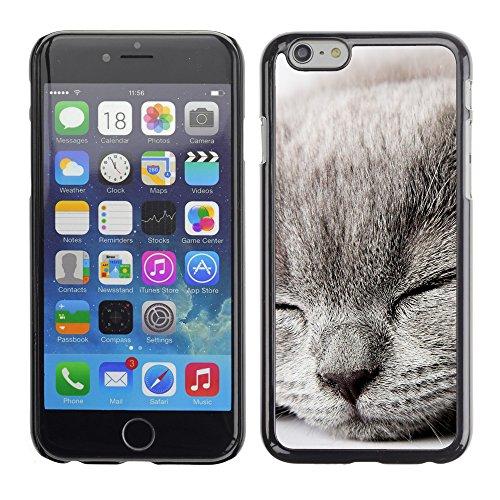 "Premio Sottile Slim Cassa Custodia Case Cover Shell // V00003831 chaton gris somnolent // Apple iPhone 6 6S 6G PLUS 5.5"""