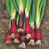 buy 100 pcs chinese green onion seeds red spring onion NO-GMO vegetable seeds for home garden planting now, new 2018-2017 bestseller, review and Photo, best price $8.99