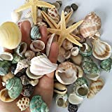 YEJI 80pcs Home Decorations Sea Shells Mixed