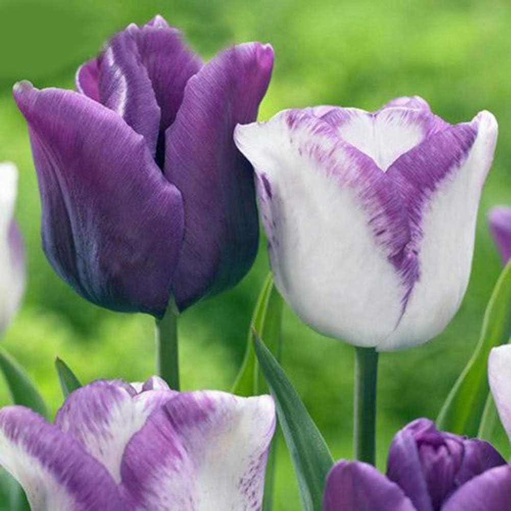 50 Piezas De Semillas De Tulipán, Jardín, Patio, Flor Decorativa, Mesa Familiar, Decoración Basc Semillas de tulipán