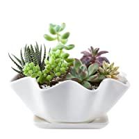 Mkono 6 Inches Ceramic Succulents Planter Bowl with Saucer Decorative Plant Pot with Drainage