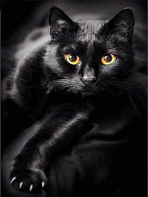 DIY Full Drill 5D Diamond Black Cat Painting Cross Stitch Embroidery Home Decor