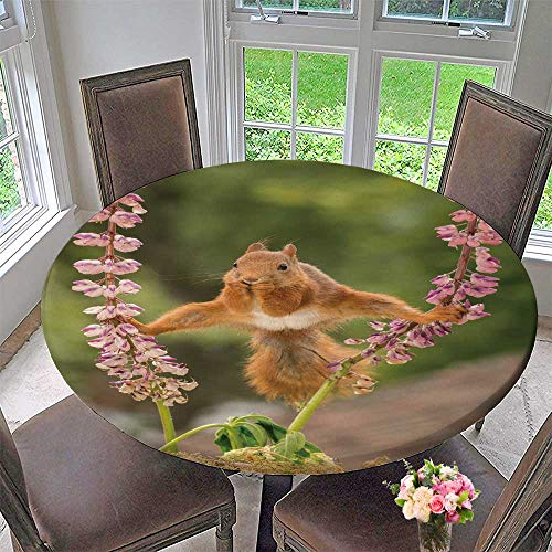 Lupine Web - PINAFORE HOME Picnic Circle Table Cloths red Squirrel Stand Between Lupine Flowers with Spread Legs for Family Dinners or Gatherings 59
