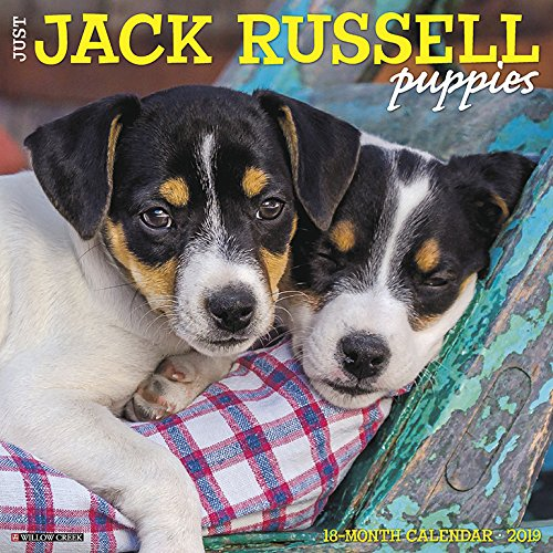Just Jack Russell Puppies 2019 Wall Calendar (Dog Breed Calendar)