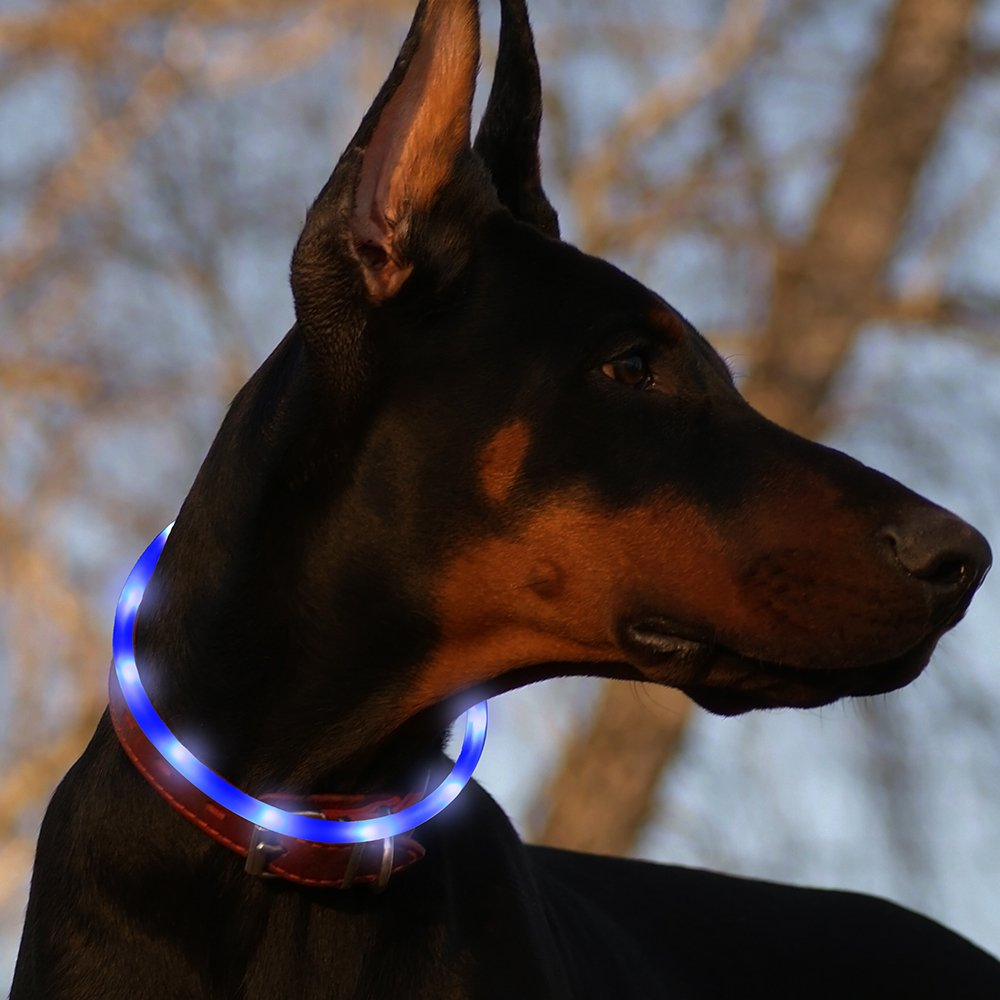Bseen Led Dog Collar USB Rechargeable Glowing Pet Safety Collars Water Resistant