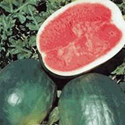 Watermelon, Black Diamond, Heirloom, Organic 100 Seeds, Super Sweet Round Melon : Garden & Outdoor