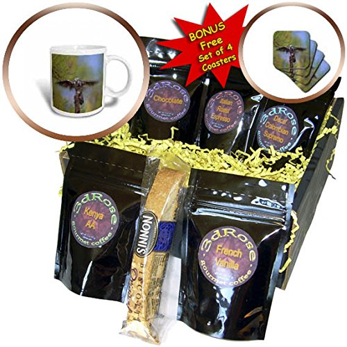 3dRose Danita Delimont - Owls - Northern Hawk Owl, Surnia ulula, flapping its wings, B.C., Canada - Coffee Gift Baskets - Coffee Gift Basket (cgb_257483_1)