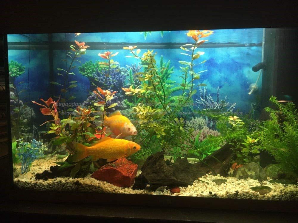 FidgetGear - Póster de Fondo para Acuario con diseño de Coral Submarino: Amazon.es: Productos para mascotas