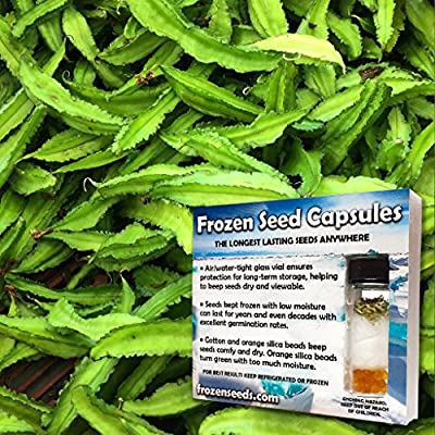Asian Winged Bean Seeds (Psophocarpus tetragonolobus) 10+ Fresh Organic Heirloom Seeds in FROZEN SEED CAPSULES for the Gardener & Rare Seeds Collector - Plant Seeds Now or Save Seeds for Years
