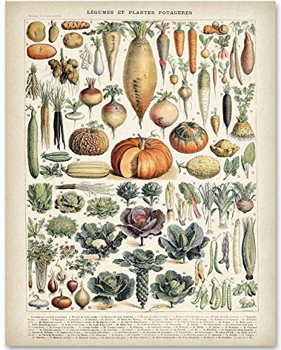(Antique Heirloom Vegetables - 11x14 Unframed Art Print - Makes a Great Gift Under $15 for Kitchen Decor)