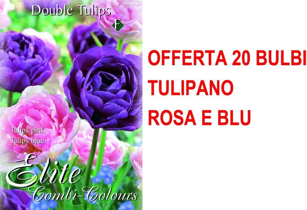OFFERTA 20 BULBI AUTUNNALI TULIPANO DOUBLE MIX BLUE PINK BULBS BULBES PERAGA
