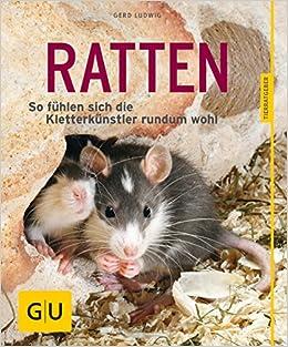 Ratten: So fühlen sich die Kletterkünstler rundum wohl