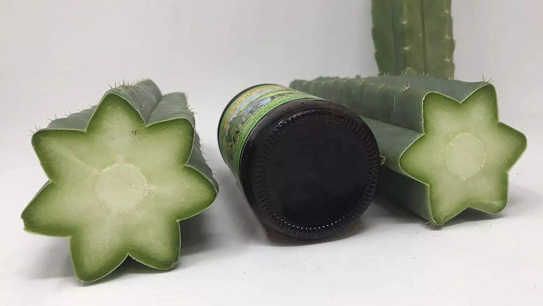 Semi organici Spessa San Pedro Per pachanoi Echinopsis Organic Tip Talee da Farmerly 3