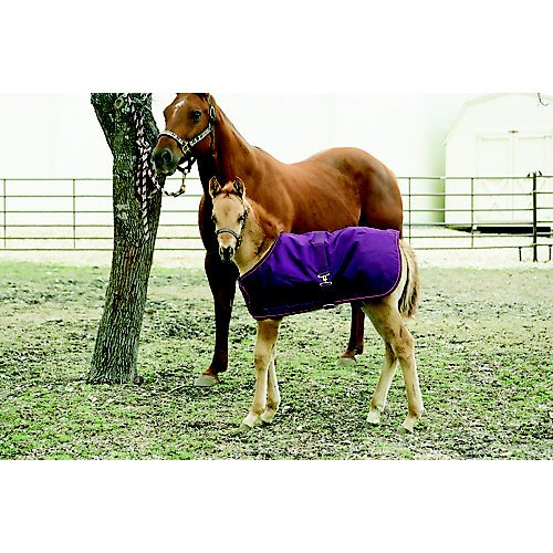d 1200 Denier Foal Turnout Neck Warmer, EP-Plum, 28-42