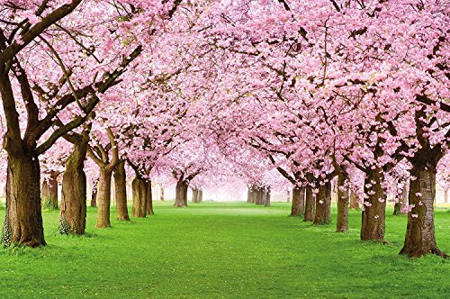GREAT ART Wall Mural Cherry Blossoms - Floral Decoration Flowers Spring Poster Garden Plants Forest Park Nature Blossom Tree Avenue 82.7x55 Inch