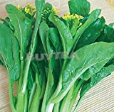 SE5 Natural Green 1 Bag 200 Seeds Cabbage Vegetables Chinese Delicious