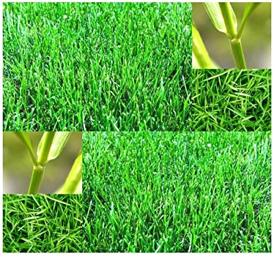 1 oz x Bermuda Grass Seed - Lawn Grass Seeds - Uses: Ideal for lawns, golf courses, athletic fields, and other turf applications - WARM SEASON GRASS - HARDY ZONES 7 - 10