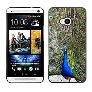 Qstar Arte & diseño plástico duro Fundas Cover Cubre Hard Case Cover para HTC One M7 ( Peacock Tale Feathers Bird Blue Green)