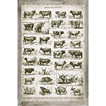 Lovely Vintage Ephemera French Cow and Bull Chart; French Country Decor; One 12x18in Unframed Paper Poster