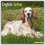 English Setter Calendar 2017 - Dog Breed Calendars - 2016 - 2017 wall calendars - 16 Month by Avonside