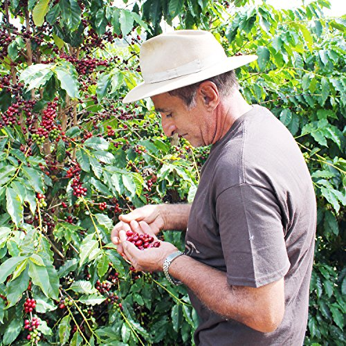 2lb Green Unroasted Coffee Brazil Catucai Red - From our family farm by Unleashed Coffee (Image #3)