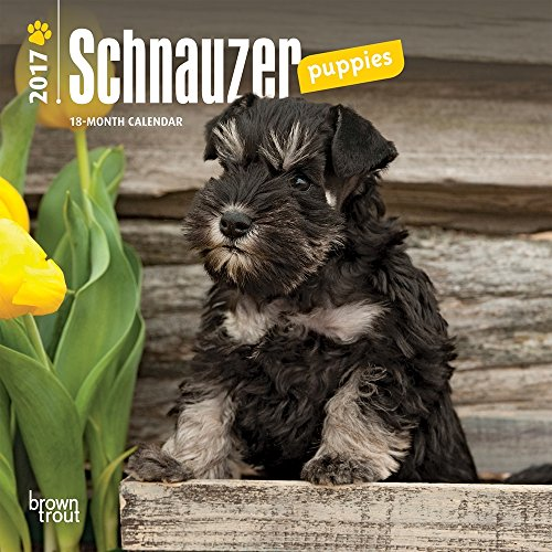 "Schnauzer Puppies 2017 Mini Calendar 7"" x 7"""