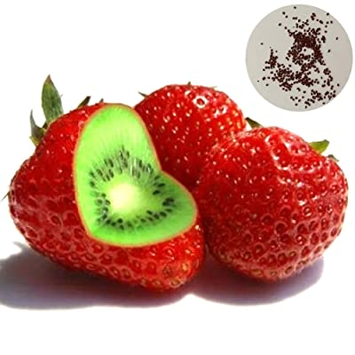 Fruit Seeds for Planting, 500Pcs Rare Strawberry Kiwi Seeds Sweet Fruit Yard Bonsai Garden Balcony Plant - Kiwi Strawberry Seeds : Garden & Outdoor