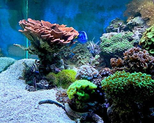 Seachem Reef Kalkwasser 500gram