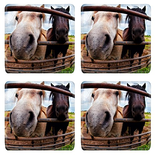 Liili Natural Rubber Square Coasters Image ID 29615267 funny pony behind fence close up via fish eye lens