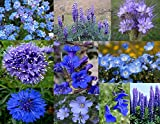 "Bamboo Cove Farm Seeds Annuals & Perennials ""Best of the Blues"" Wildflower Seeds With a FREE Wildflower gift, 1000 seeds"